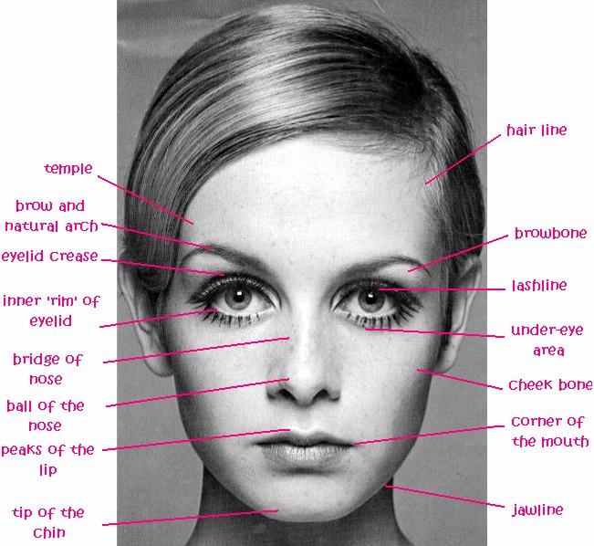 facialstructure.jpg